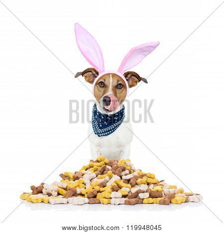 Easter Bunny Hungry Dog