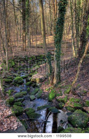 Frankfurt City Forest Stream