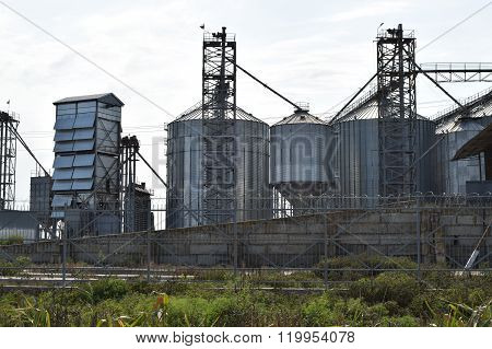 The Rice Plant
