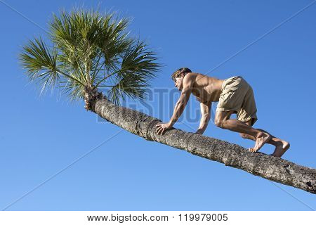Muscular Man Climbing Trunk Of Palm Tree