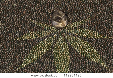 Macro Hemp Seed In Many Hemp Seeds Background