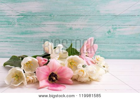Fresh  Tulips And Narcissus Flowers  On White Painted Wooden Background Against Turquoise Wall.