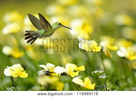 Hummingbird On Yellow Summer Background