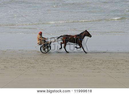 Carriage Rider on Dunedin Beach, New Zealand