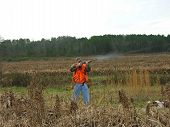 image of ringneck  - man shooting at several quail - JPG