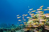 Coral reef with soft and hard corals and exotic fish on bottom of Indian ocean, Maldives. poster