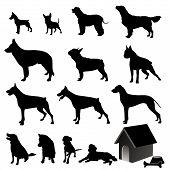 stock photo of german-sheperd  - dog silhouettes illustration  - JPG