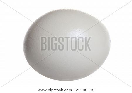 Isolated Ostrich Egg