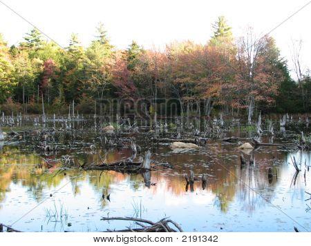 Fall Swamp Scene