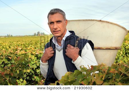 50 years old man holding basket amongst vines