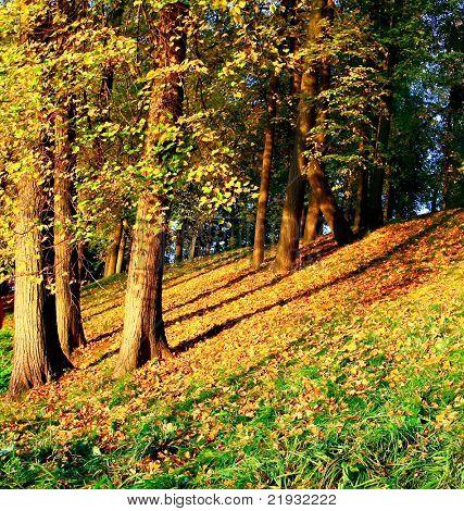 vivid forest hillock
