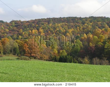 Fall-colored Trees