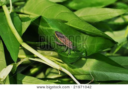 Insect on vegetables