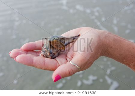 Holding A Whelk