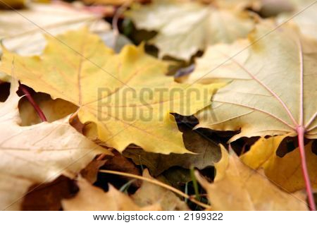 Beautiful Leaves