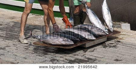 Fresh Tuna From Boat