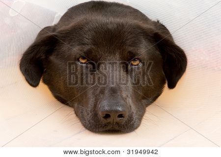 Dog With Funnel