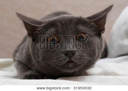 Cat orange eyes