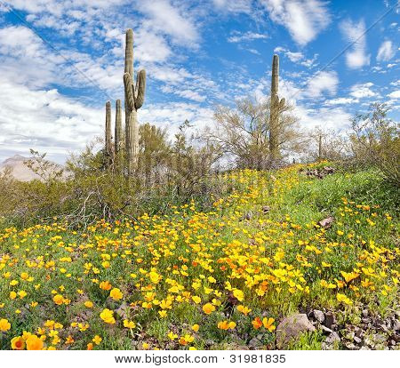 Blooming Desert