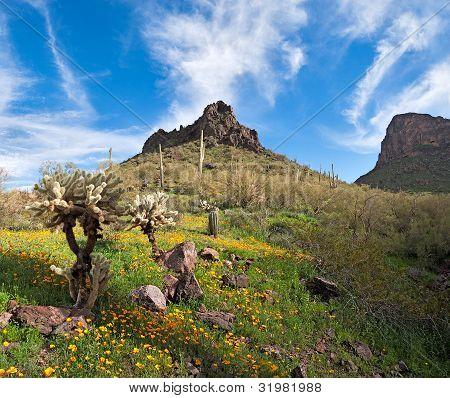 blühende Wüste
