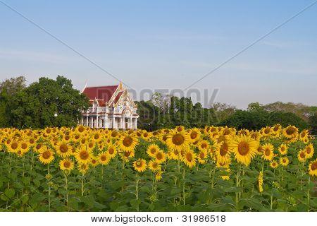 Buddhist temple in sunflower field