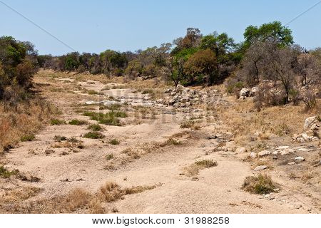 Rocky Dry Riverbed With Trees And Bushes