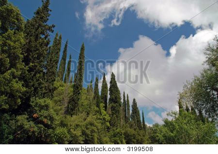 View Of Cyprus Forest In Greek Island