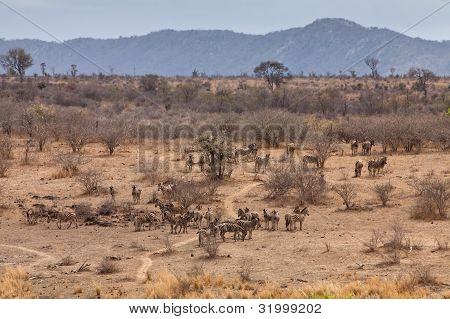 Giraffe Walking Through An African Landscape