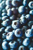 Fresh Blueberries Straight from the Farmers Market, Blueberry Background, Fresh Picked Blueberries   poster