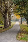 Fall Forest Landscape. Lonely Street In Autumn poster