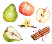 Watercolor Cinnamon Sticks, Red Ripe Apple And Green Pear, Vanilla Sticks With Flower Isolated On Wh poster