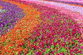Blossoming field of multicolored vibrant flowers poster