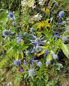 Beautiful Purple Flower Grows In The Field. Prickly Weed. Beautiful Juicy Grass. Purple Petal... poster