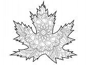 Leaf Of A Tree, Maple. Coloring Page. Colorless And Color Samples For Adult Antistress Coloring Book poster