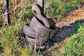 Old Car Tires Left In The Natural Environment. Nature Is Destroyed. Rubber Tires Left In Forest As A poster