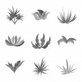 Vector Design Of Foliage And Floral Sign. Collection Of Foliage And Summer Stock Symbol For Web. poster