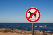 Coast Of Atlantic Ocean With A No Dogs Sign, Except Guide Dogs. Small Waves. Blue Sky. Porto, Portug poster