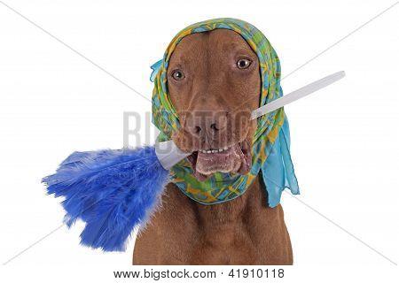 Janitor Dog