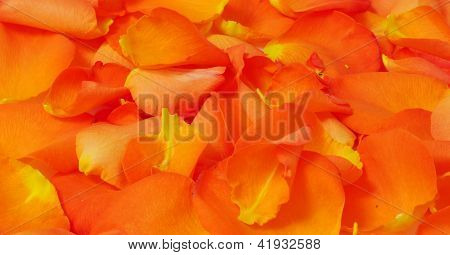 Orange Fiery Rose Petals, Texture, Horizontal Background