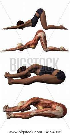 Female Anatomic Body - Yoga