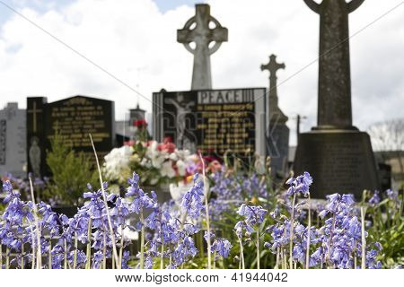 Bluebells In An Old Ancient Irish Celtic Graveyard