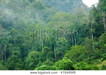 Tropical lush rainforest landscape in Pangmapha, Thailand