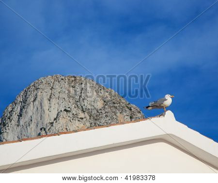 Mediterranean seagull on the roof tip and Ifach Penon of Calpe  in background