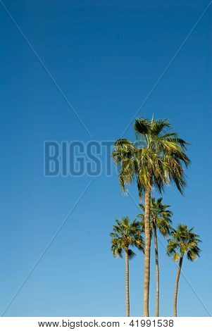 Palm Trees Against A Brilliant Blue Sky