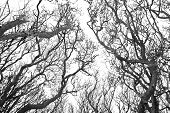 Grey Creepy Branches Swaying