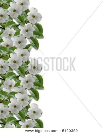 Floral Border Dogwood In Bloom