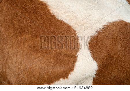 Cow Hide Texture