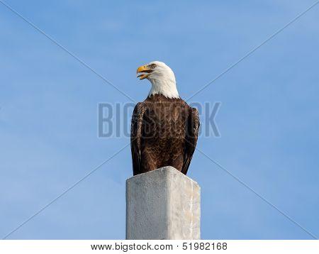 Eagle Cry