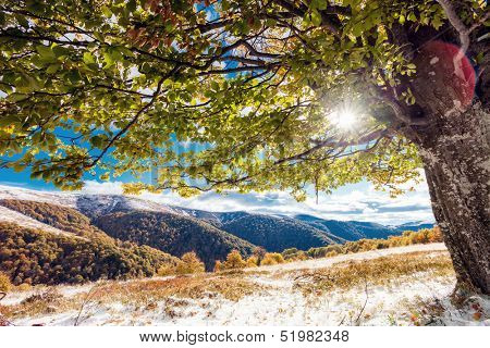 Beautiful colorful autumn leaves in the forest. Carpathian, Ukraine, Europe. Beauty world.