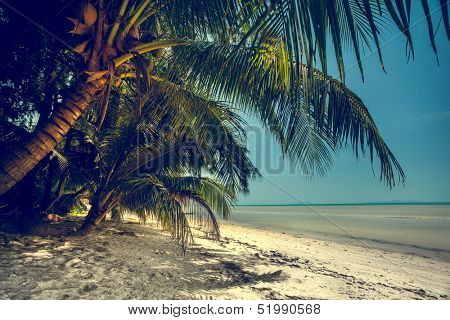 Beautiful summer landscape on the beach with palm tree